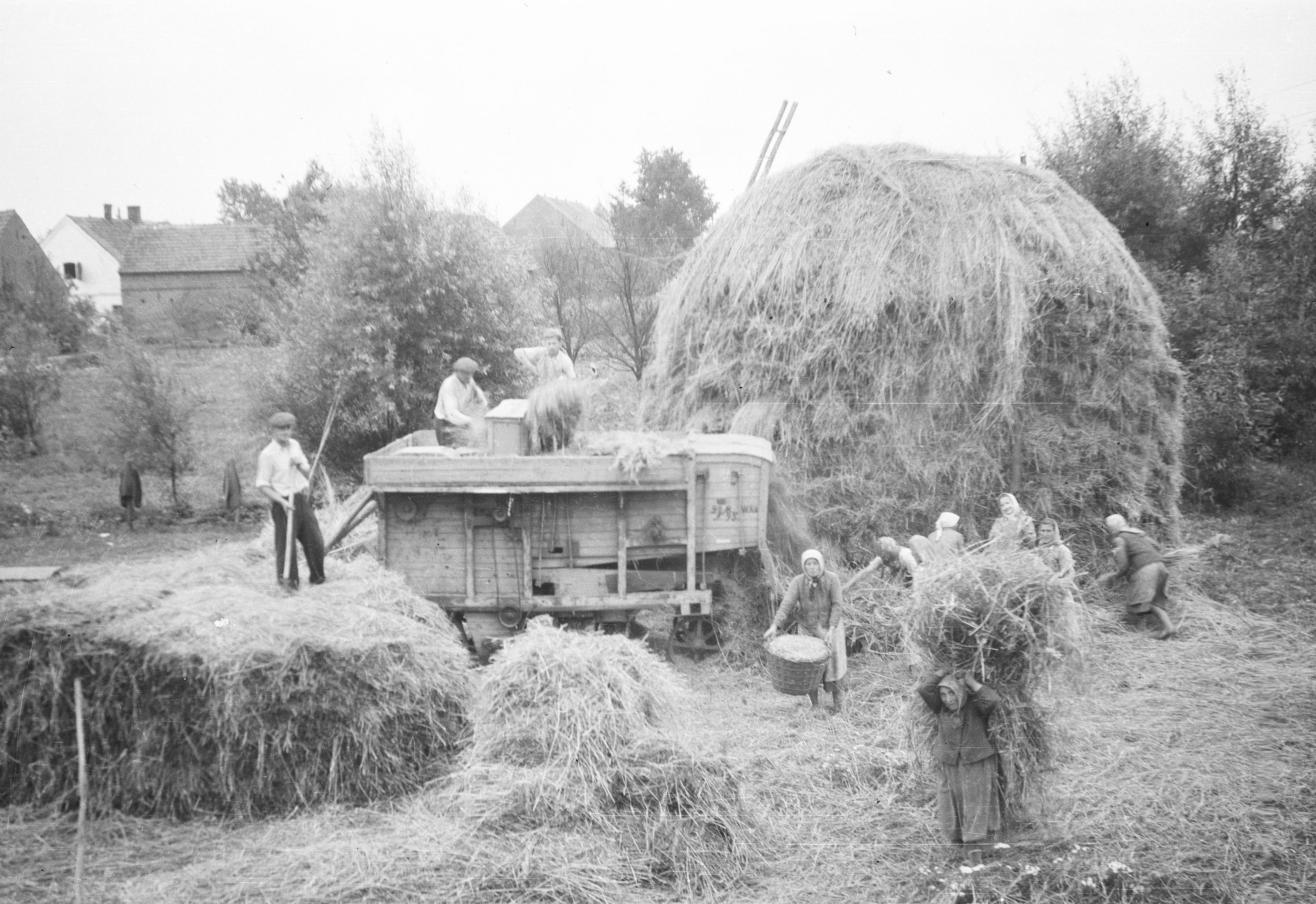 Młócka u Czyżowiczów, Brzózka, Dolny Śląsk, lata 50. XX w.