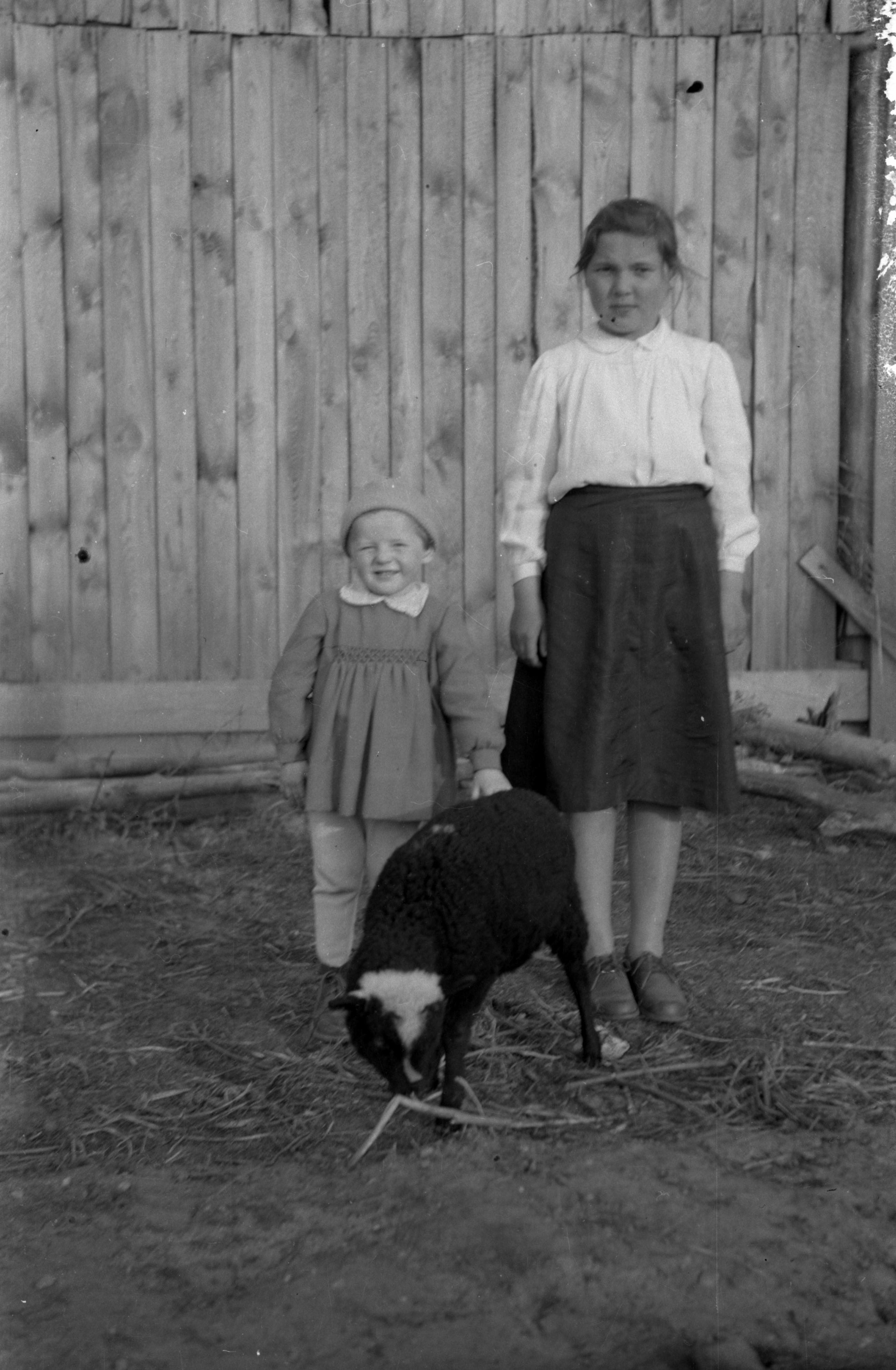 Dziewczynki z rodziny Sybiraków z owieczką, Brzózka, Dolny Śląsk, lata 50. XX w.