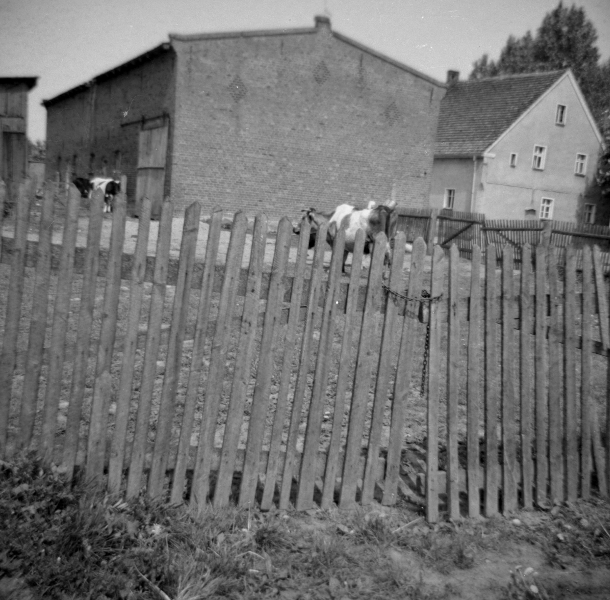 Gospodarstwo Augustyna Czyżowicza, Brzózka, Dolny Śląsk, lata 80. XX w.