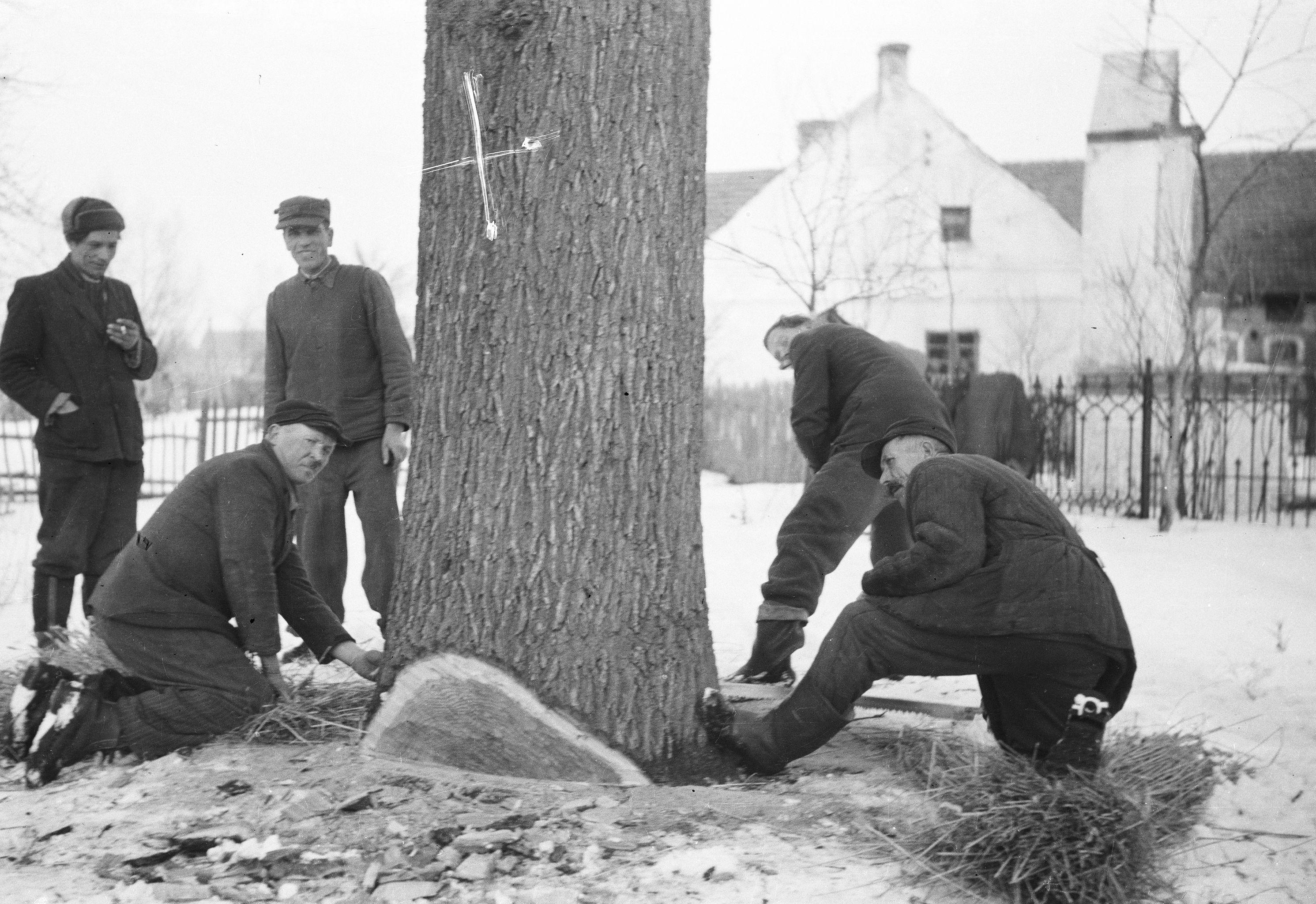 Pomoc sąsiedzka, od lewej: Stanisław Szwaj, Jan Pietruszka, Władysław Czyżowicz, Piotr i Kazimierz Waetanowicz, Brzózka, lata 50. XX w.