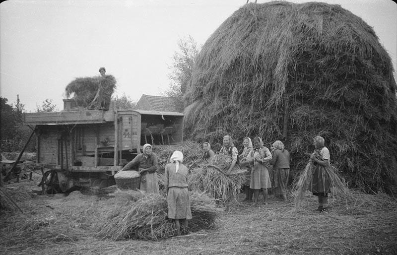 Młócka u Czyżowiczów, Brzózka, Dolny Śląsk, 1957 r.