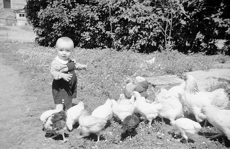 Małe dziecko z kurami, Dolny Śląsk, 2. poł. XX w.